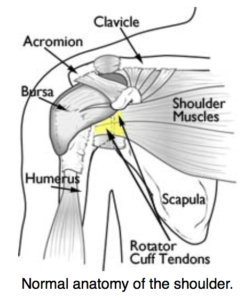 rotator cuff injury orthopedic specialist in los angeles california
